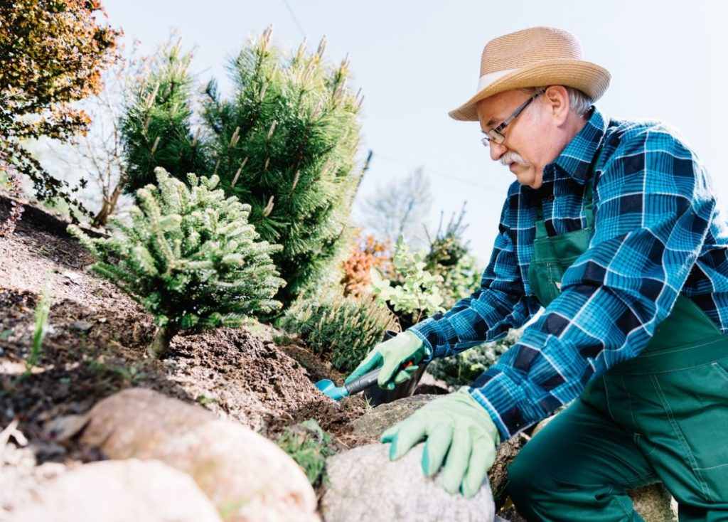 retired man gardening